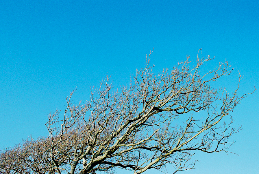 Wind Branches
